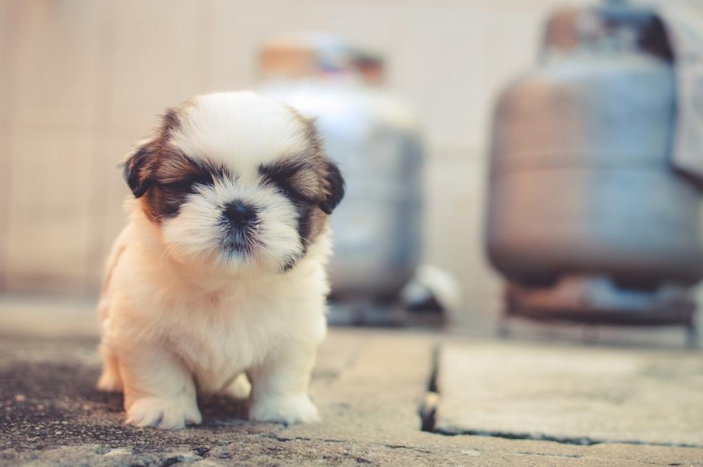 Cómo elegir el mejor pienso para cachorros