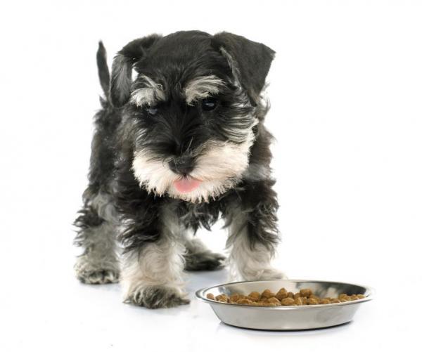 ¿Cómo elegir un buen pienso para perros de raza pequeña?