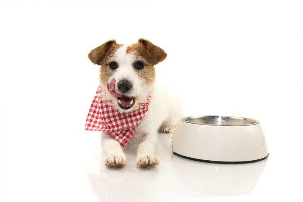 Pienso hipoalergénico para perros
